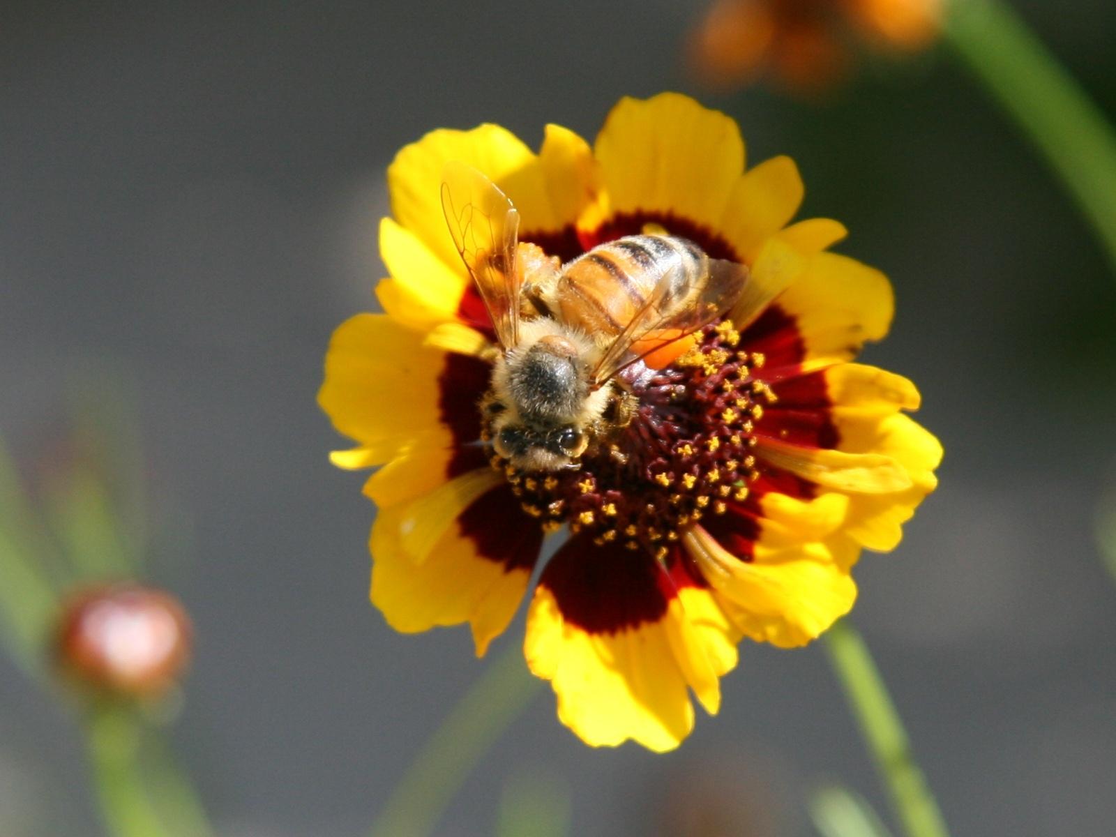 bee on flower photo.jpg